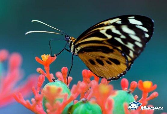 自然奇趣 蝴蝶破茧而出成长蜕变全过程 组图