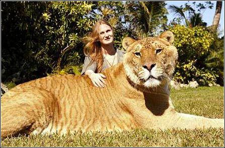 世界上最大的老虎图片